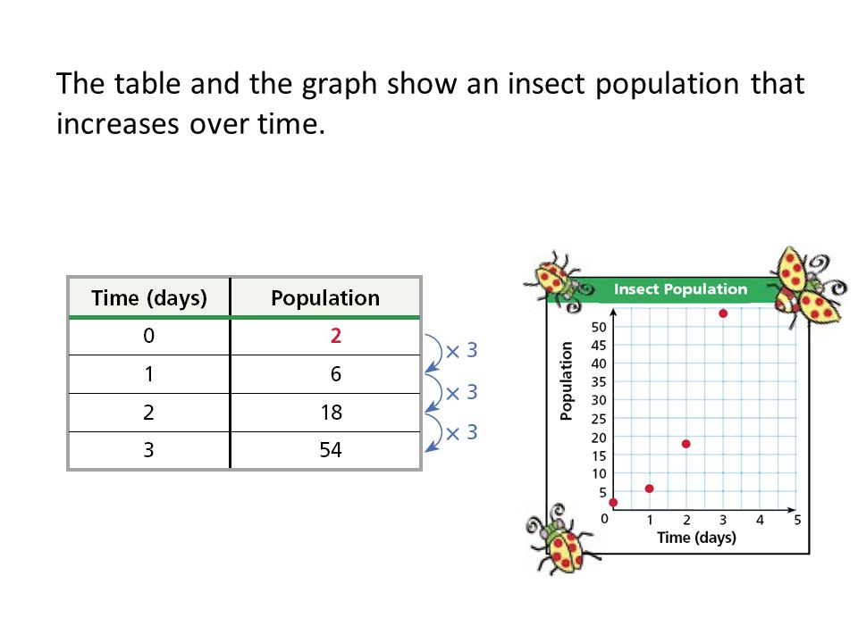 The table and the graph show an insect population that increases over time.