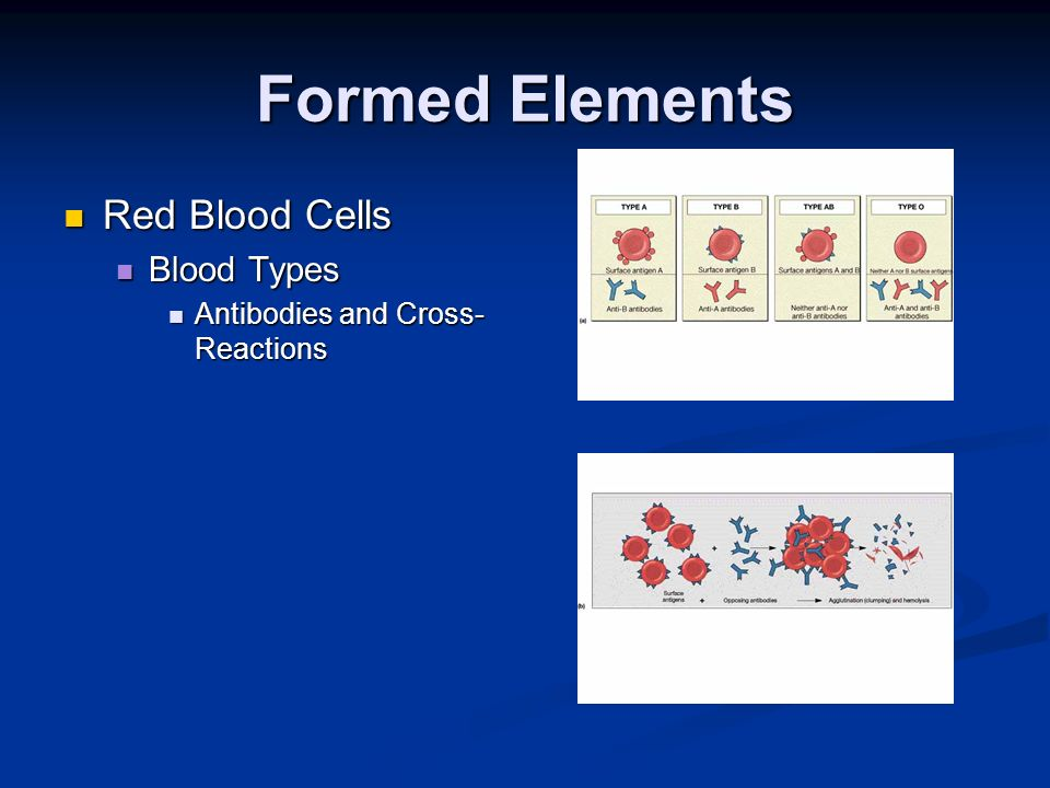 Formed Elements Red Blood Cells Blood Types