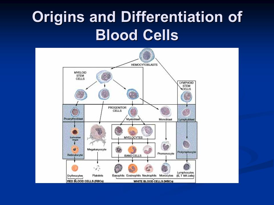 Origins and Differentiation of Blood Cells
