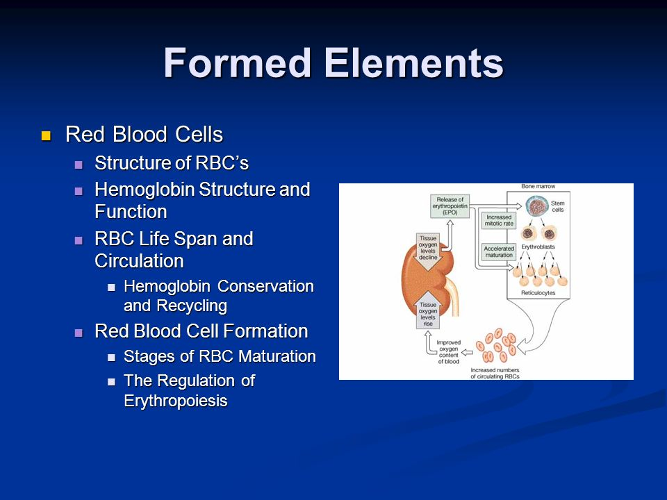 Formed Elements Red Blood Cells Structure of RBC's