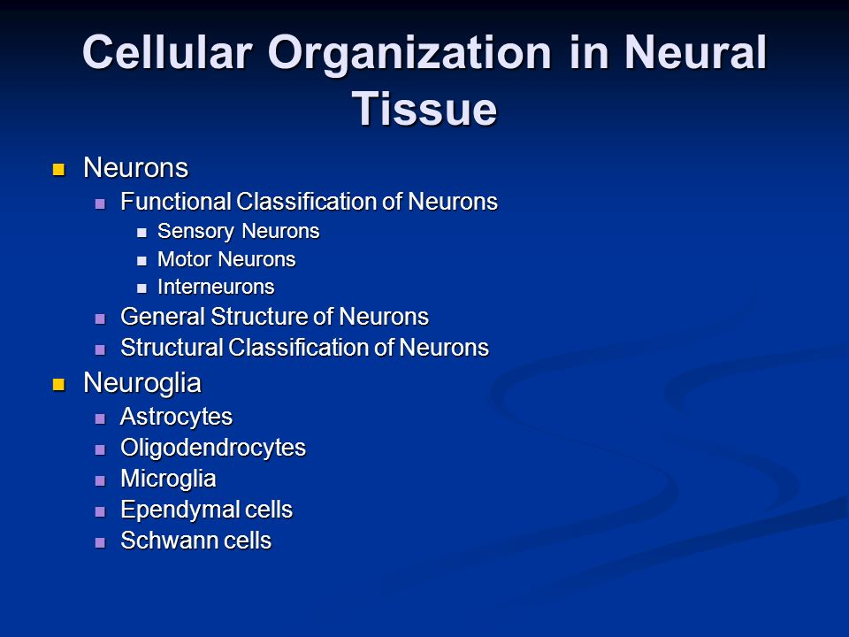 Cellular Organization in Neural Tissue