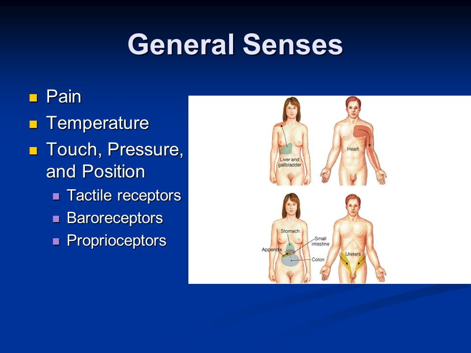 General Senses Pain Temperature Touch, Pressure, and Position