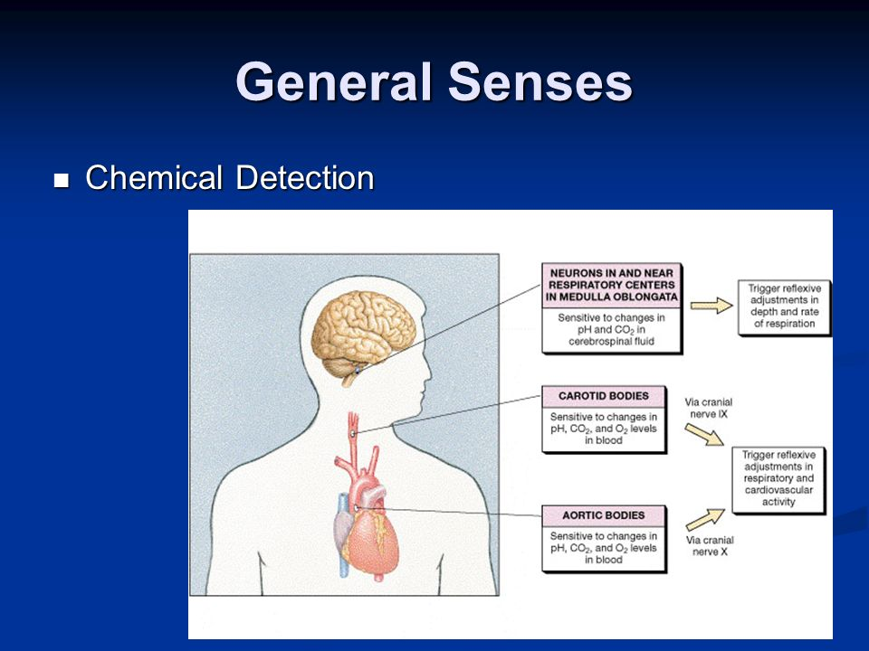General Senses Chemical Detection