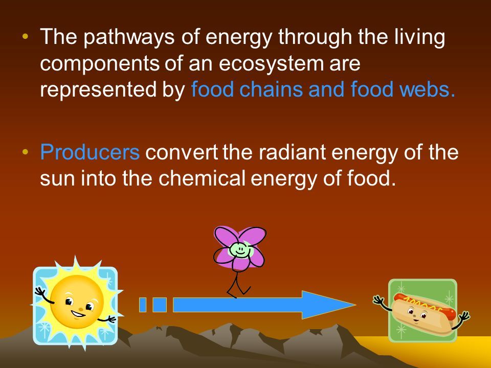 The pathways of energy through the living components of an ecosystem are represented by food chains and food webs.
