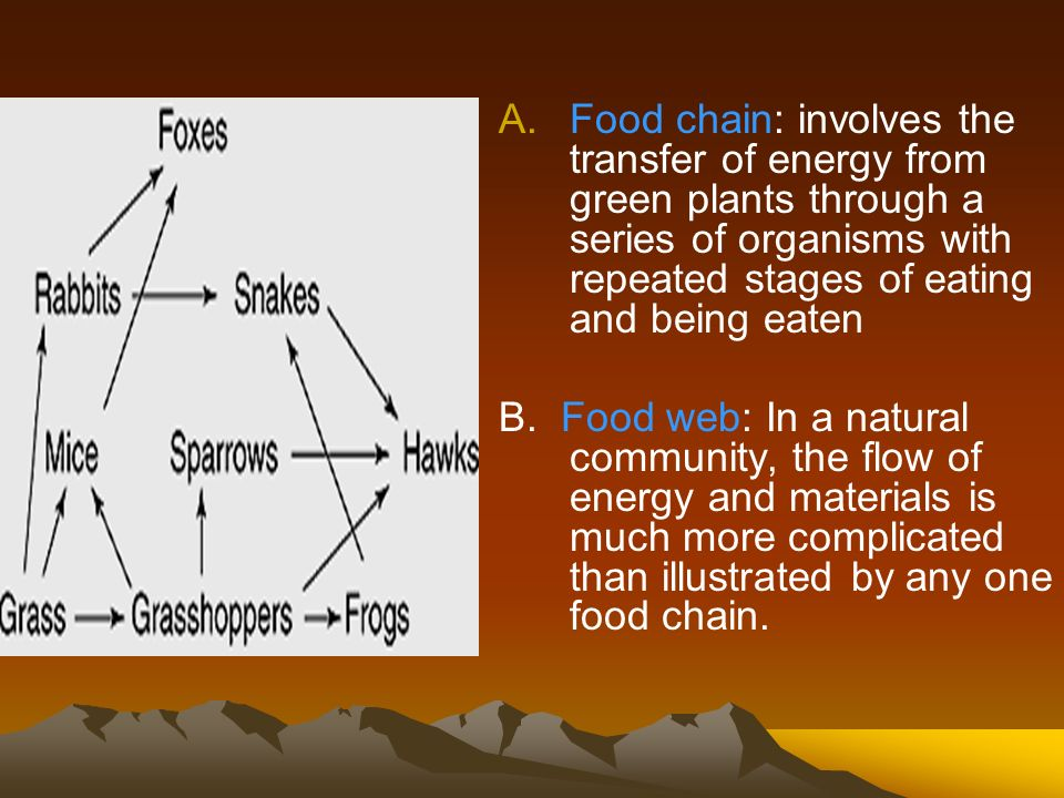 Food chain: involves the transfer of energy from green plants through a series of organisms with repeated stages of eating and being eaten
