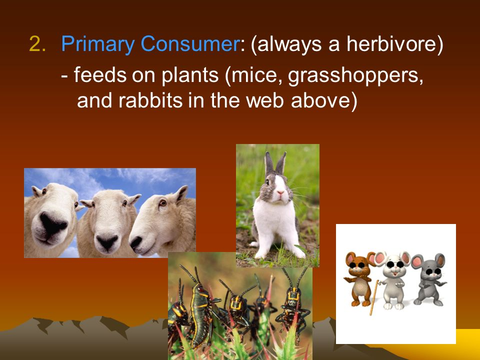 Primary Consumer: (always a herbivore)