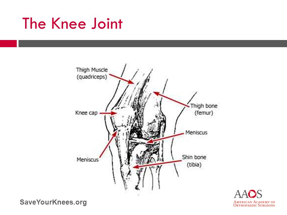 The Knee Joint To understand how to protect your knees, it is helpful to understand how the joint works.