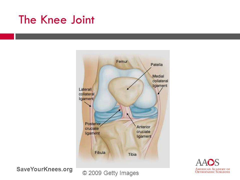 The Knee Joint © 2009 Getty Images