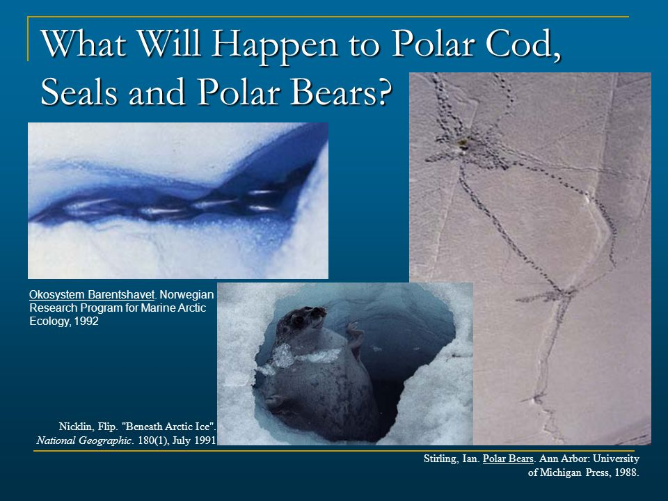 What Will Happen to Polar Cod, Seals and Polar Bears