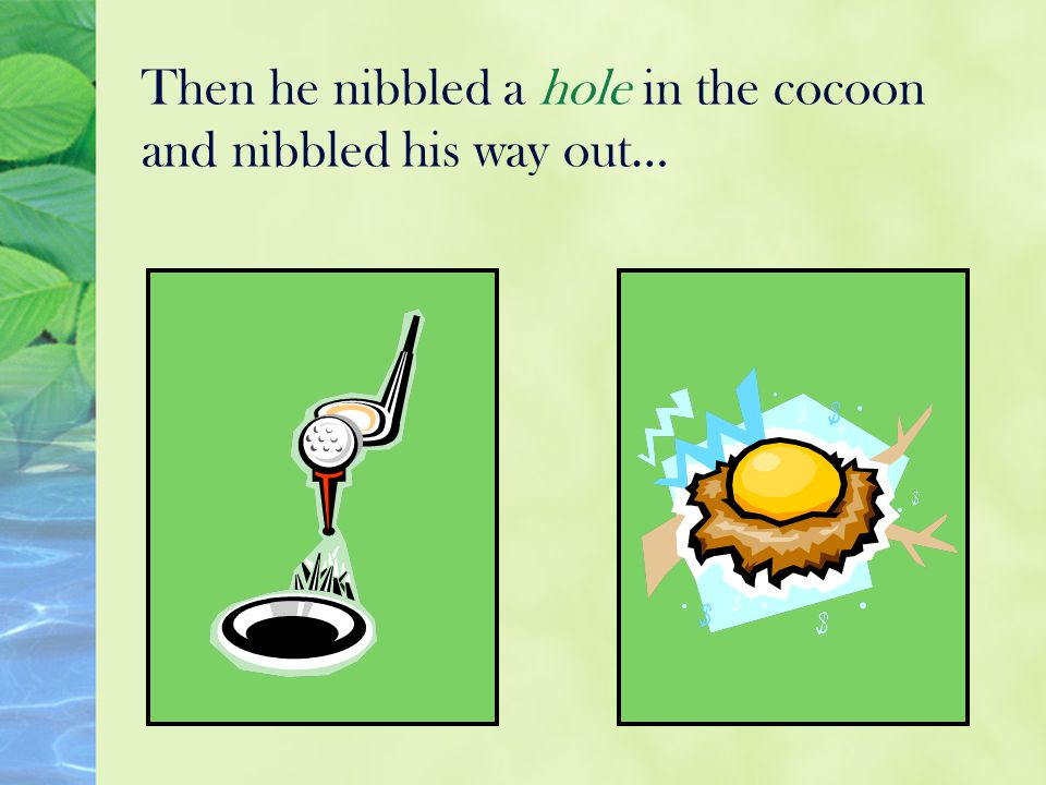Then he nibbled a hole in the cocoon and nibbled his way out…