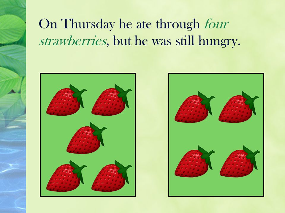 On Thursday he ate through four strawberries, but he was still hungry.