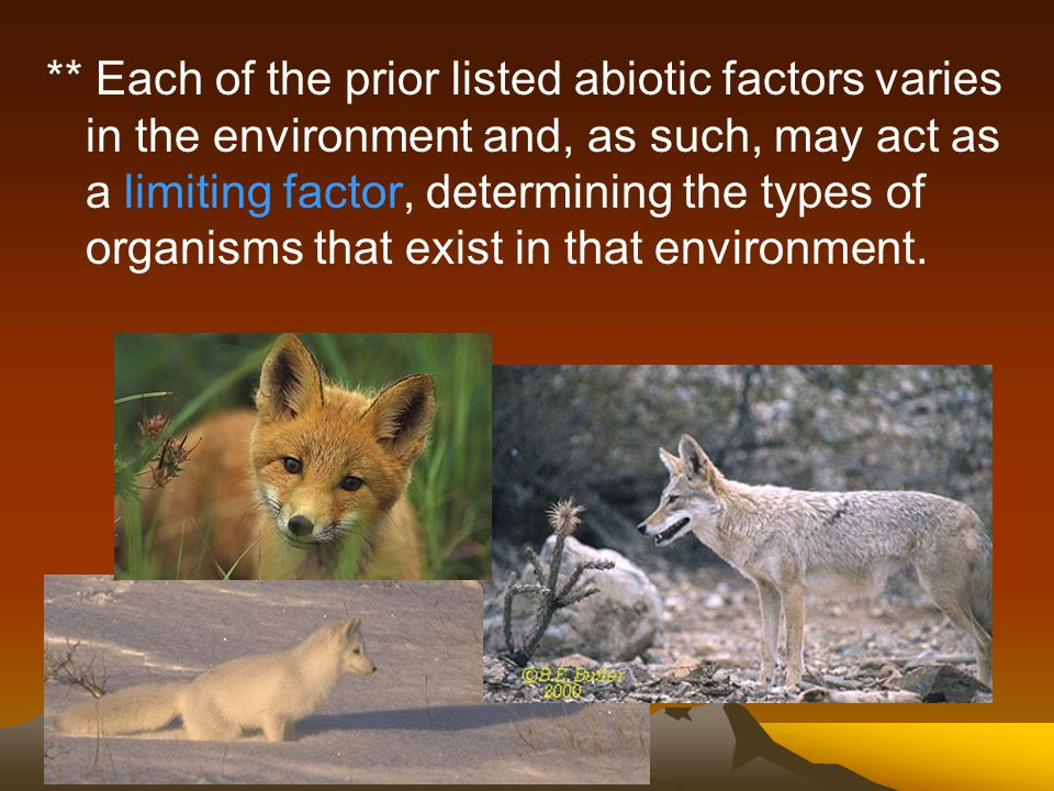 ** Each of the prior listed abiotic factors varies in the environment and, as such, may act as a limiting factor, determining the types of organisms that exist in that environment.