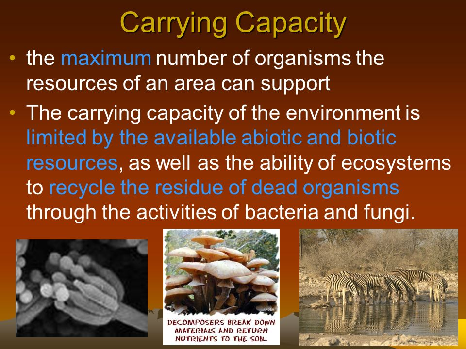 Carrying Capacity the maximum number of organisms the resources of an area can support.