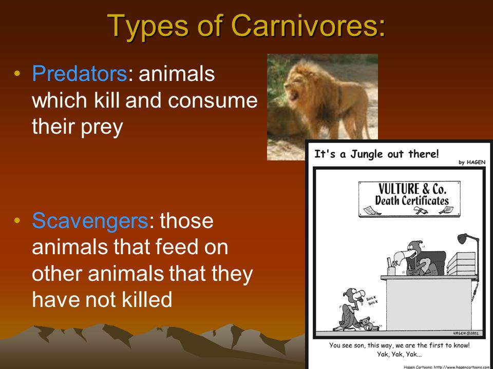 Types of Carnivores: Predators: animals which kill and consume their prey.