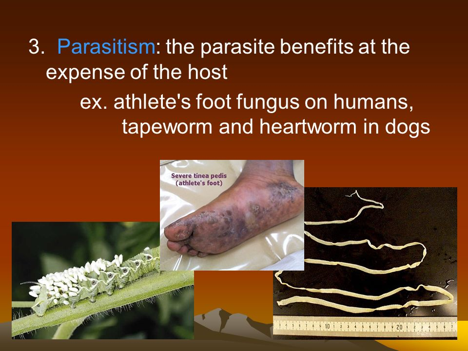 3. Parasitism: the parasite benefits at the expense of the host