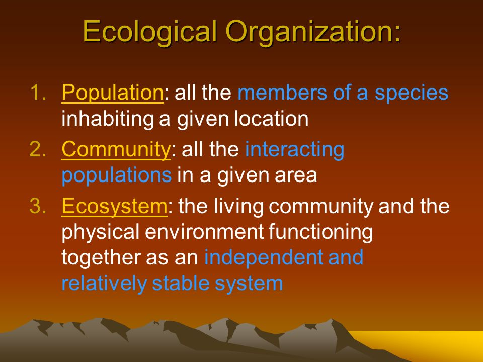 Ecological Organization: