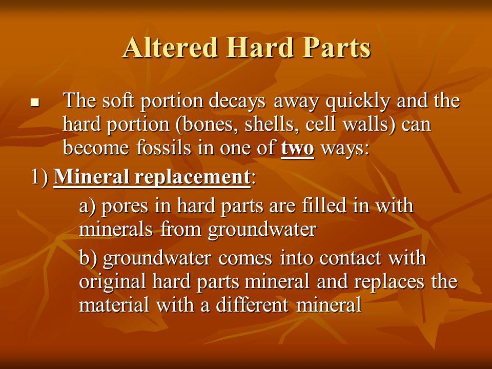 Altered Hard Parts The soft portion decays away quickly and the hard portion (bones, shells, cell walls) can become fossils in one of two ways: