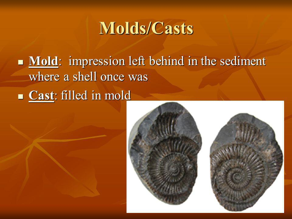 Molds/Casts Mold: impression left behind in the sediment where a shell once was.