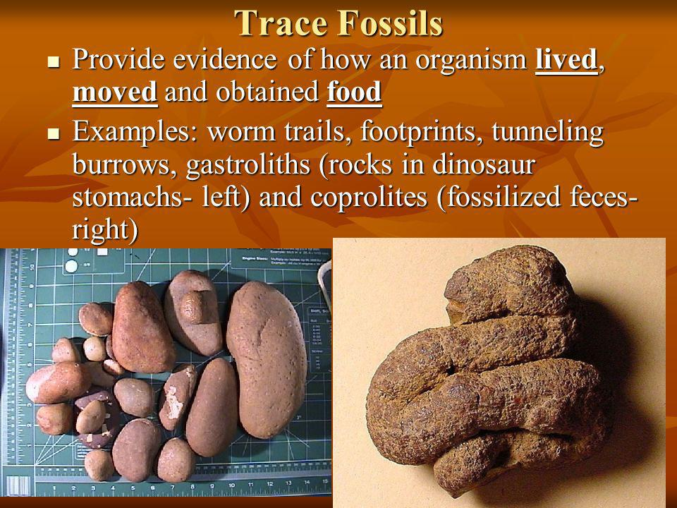 Trace Fossils Provide evidence of how an organism lived, moved and obtained food.