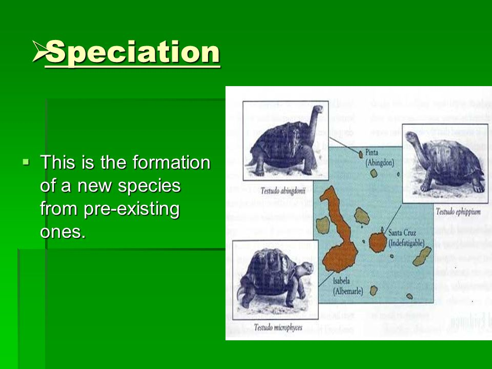 Speciation This is the formation of a new species from pre-existing ones.