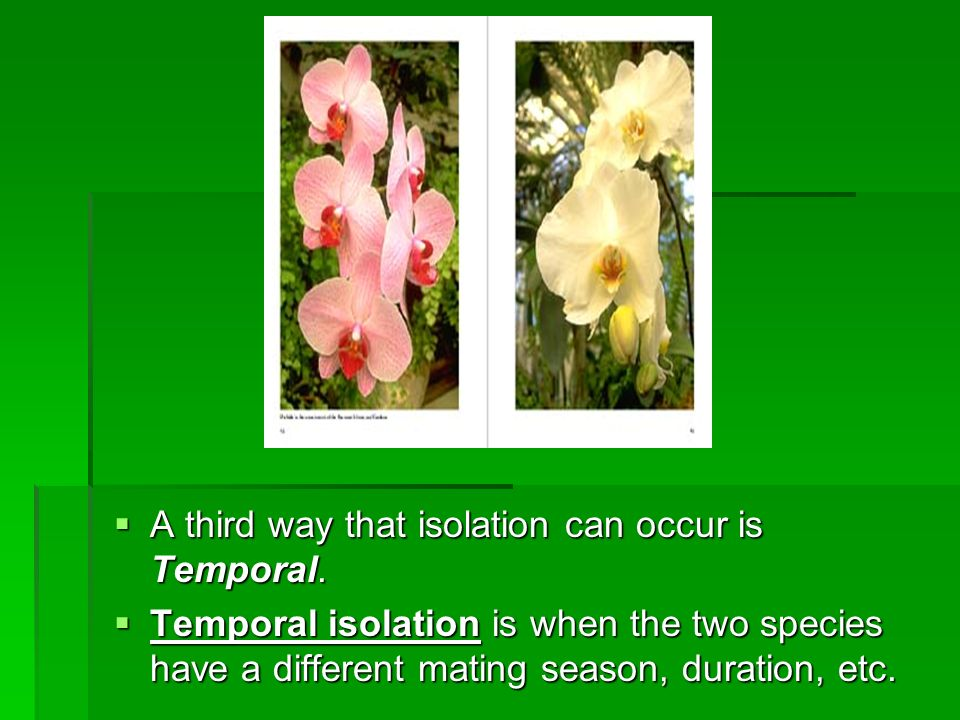 A third way that isolation can occur is Temporal.