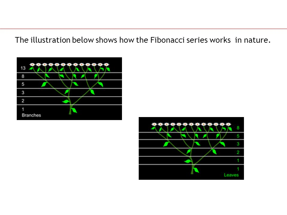 The illustration below shows how the Fibonacci series works in nature.