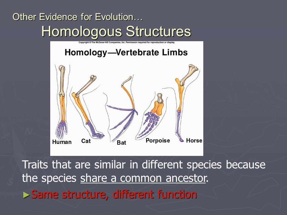 Other Evidence for Evolution… Homologous Structures