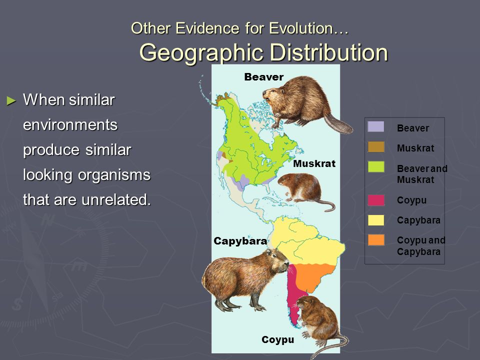 Other Evidence for Evolution… Geographic Distribution