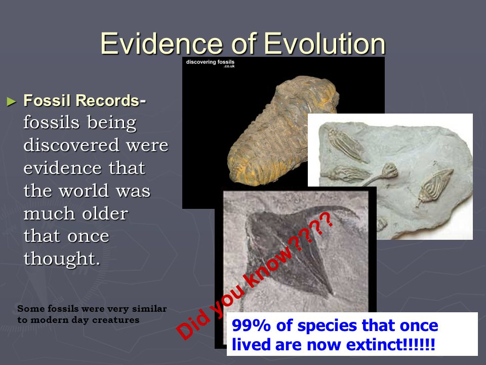 Evidence of Evolution Did you know