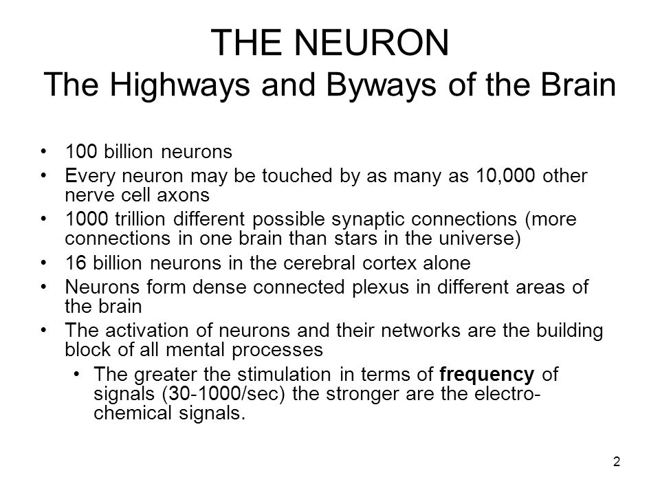 THE NEURON The Highways and Byways of the Brain