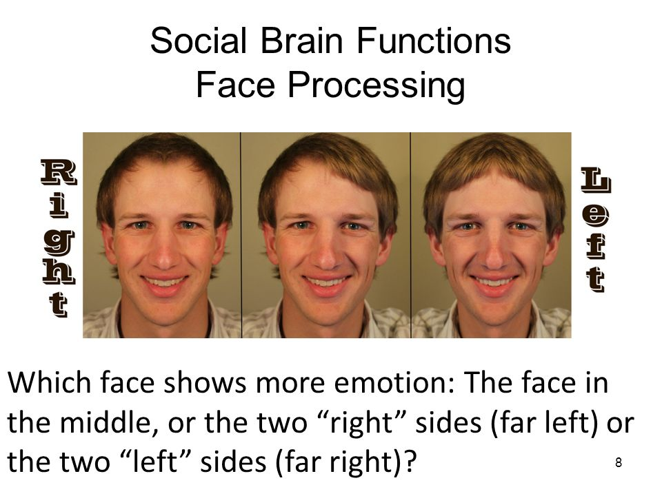 Social Brain Functions Face Processing