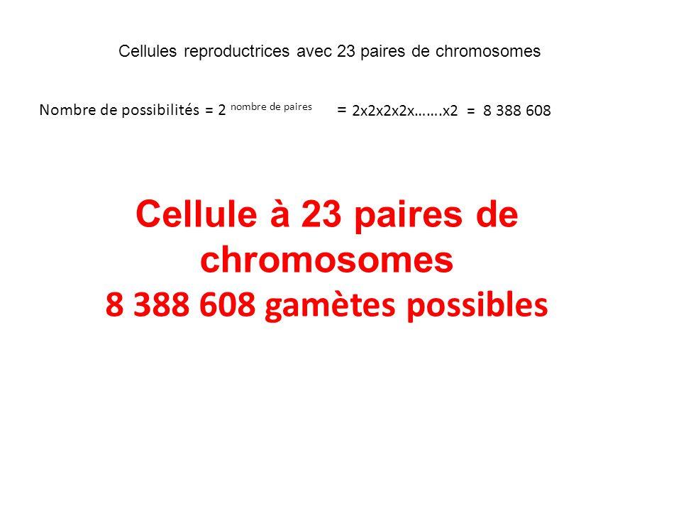 Cellule à 23 paires de chromosomes
