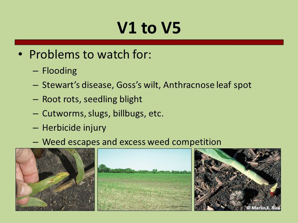 V1 to V5 Problems to watch for: Flooding