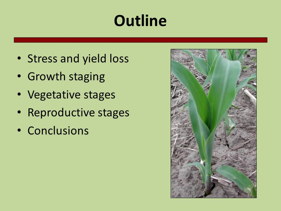 Outline Stress and yield loss Growth staging Vegetative stages