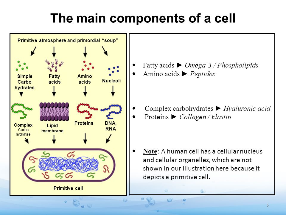 The main components of a cell