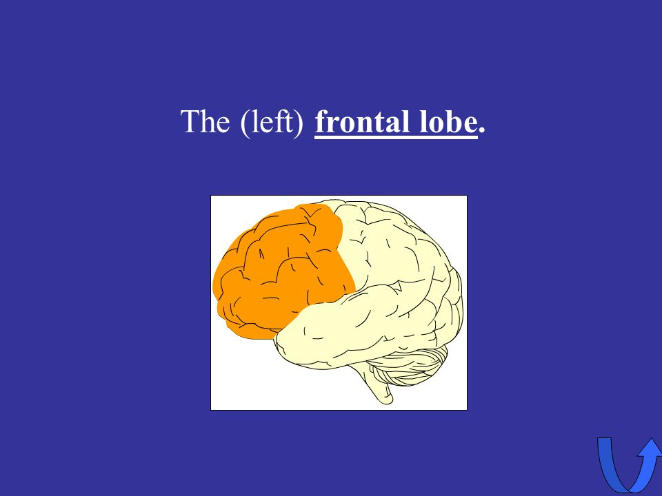 The (left) frontal lobe.