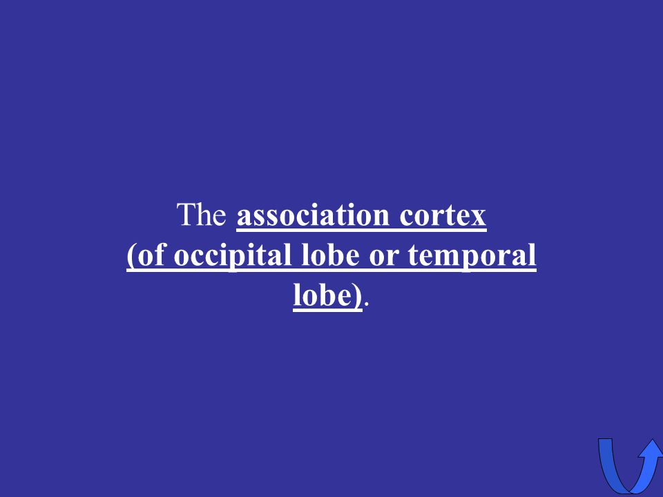 The association cortex (of occipital lobe or temporal lobe).