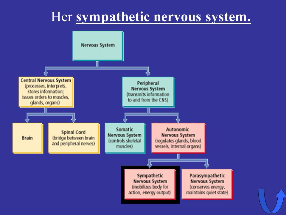 Her sympathetic nervous system.