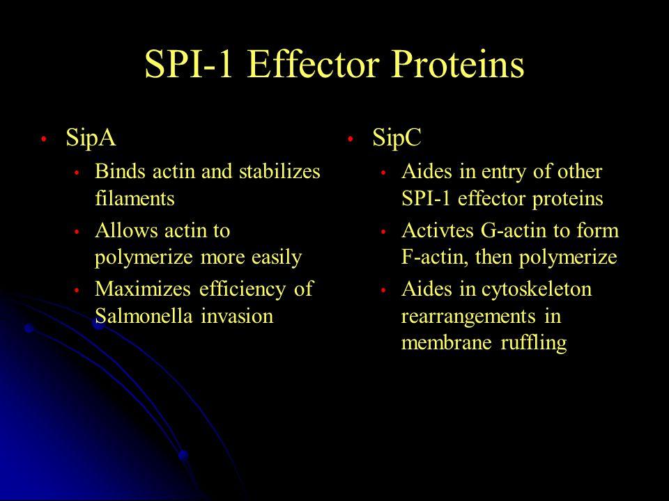 SPI-1 Effector Proteins
