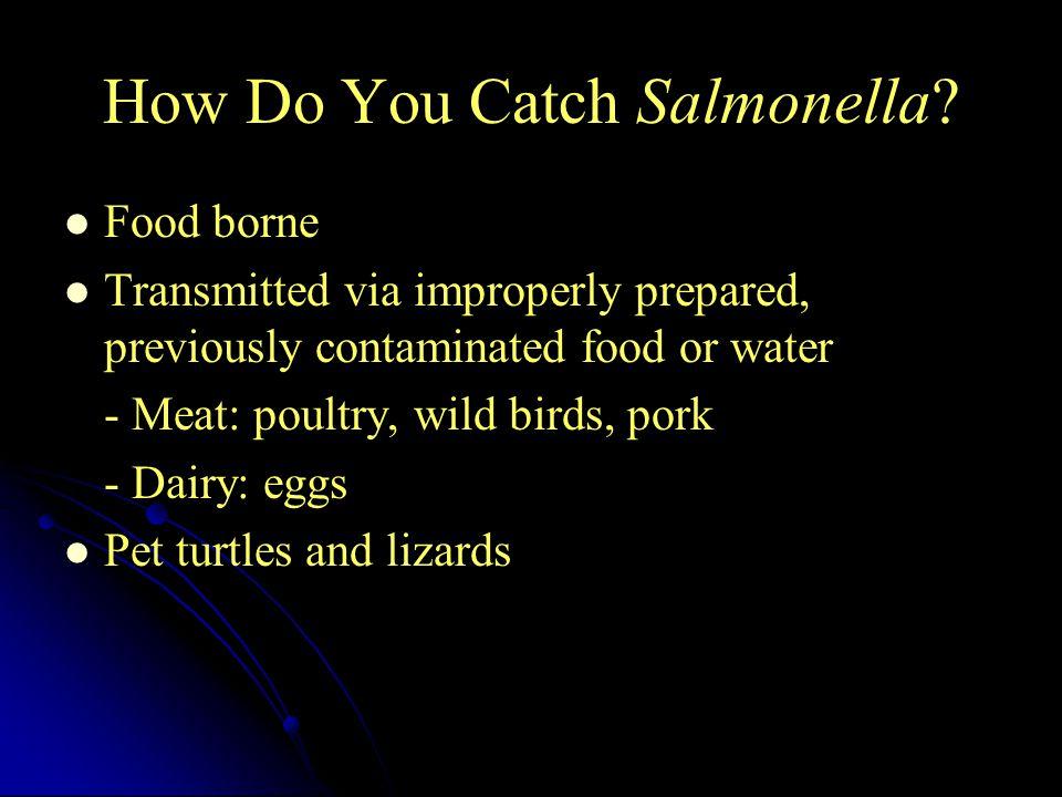 How Do You Catch Salmonella