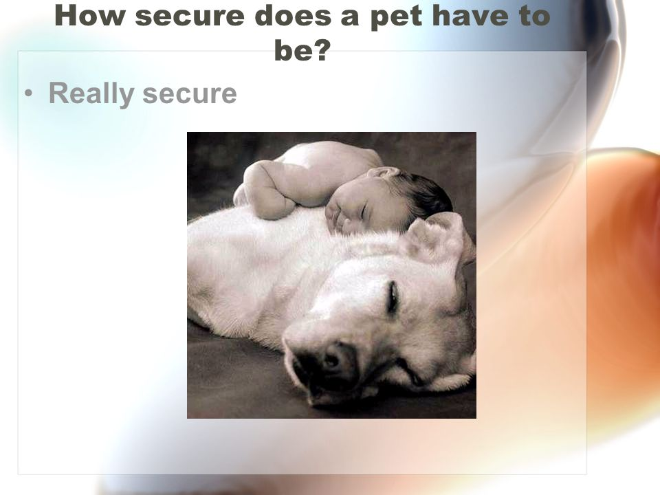 How secure does a pet have to be
