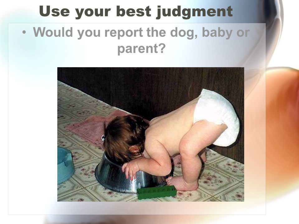 Would you report the dog, baby or parent