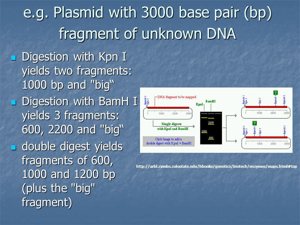 e.g. Plasmid with 3000 base pair (bp) fragment of unknown DNA