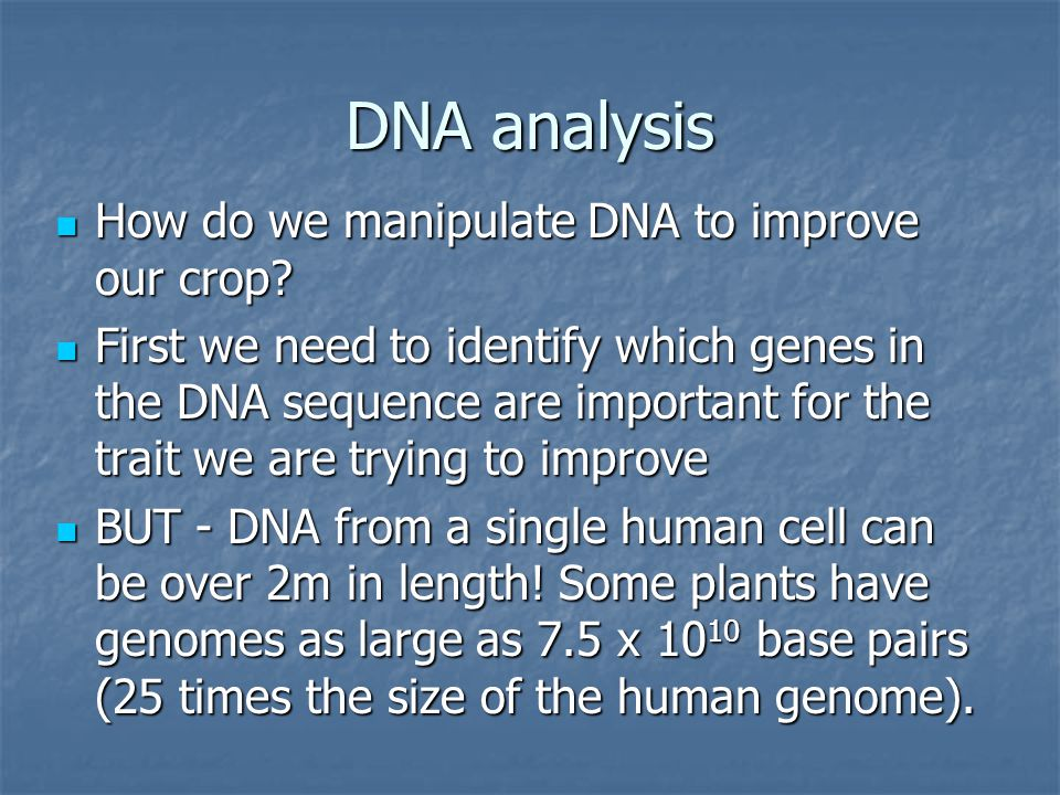 DNA analysis How do we manipulate DNA to improve our crop