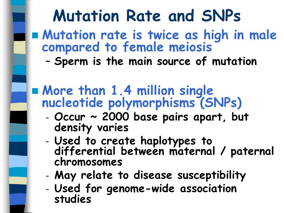 Mutation Rate and SNPs Mutation rate is twice as high in male compared to female meiosis. Sperm is the main source of mutation.