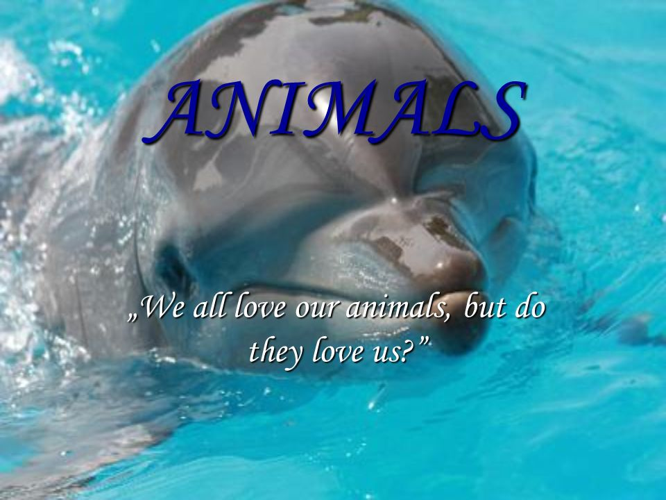 """We all love our animals, but do they love us"