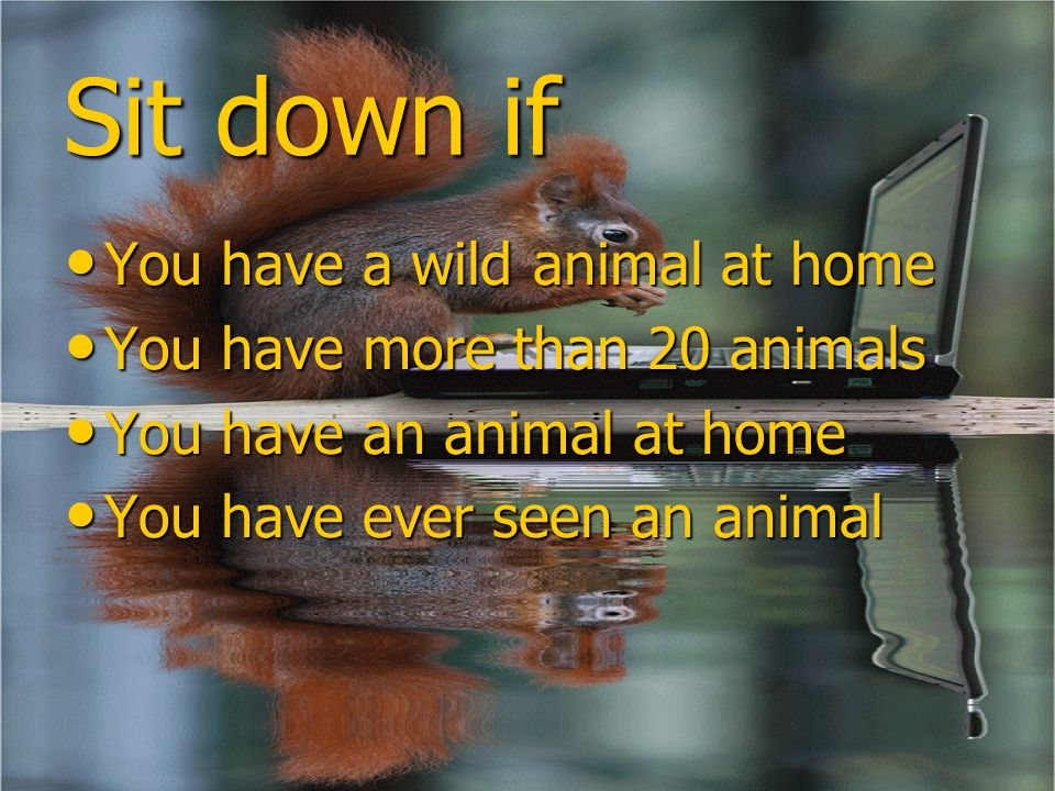 Sit down if You have a wild animal at home