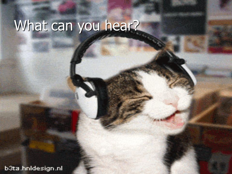 What can you hear