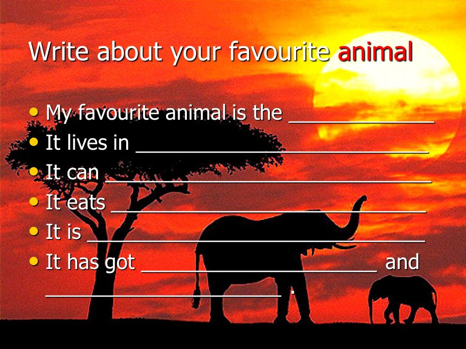 Write about your favourite animal