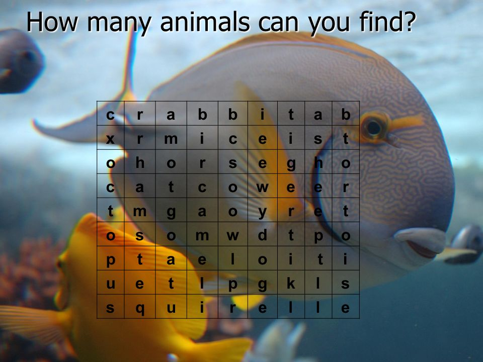 How many animals can you find